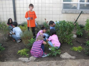Montgomery Elementary school students, working hard to help build their new rain garden
